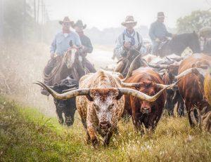"""Herding History"" - Nichole P. Conard"